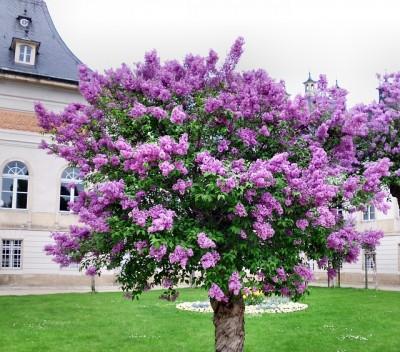 treeandshrub