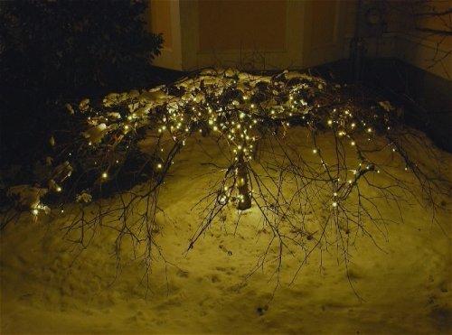 Christmas Lights on low Shrub along walkway