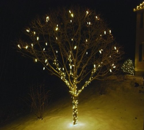 Christmas Lights hung on a small tree near the front walkway